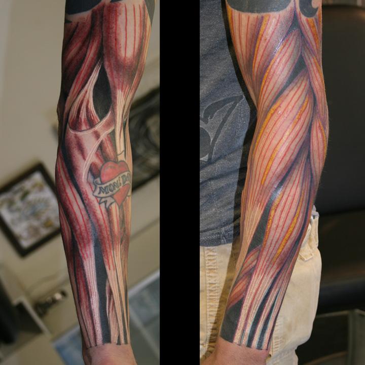 muscle-arm.jpg